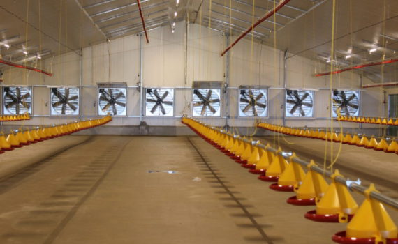 Growth and Opportunities in the Poultry Industry